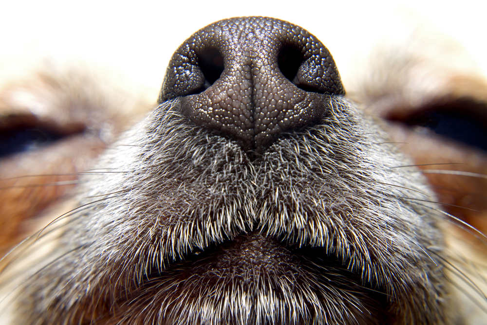 Image of nose of dog to represent how to Track a Conversion When There is No Thank You Page